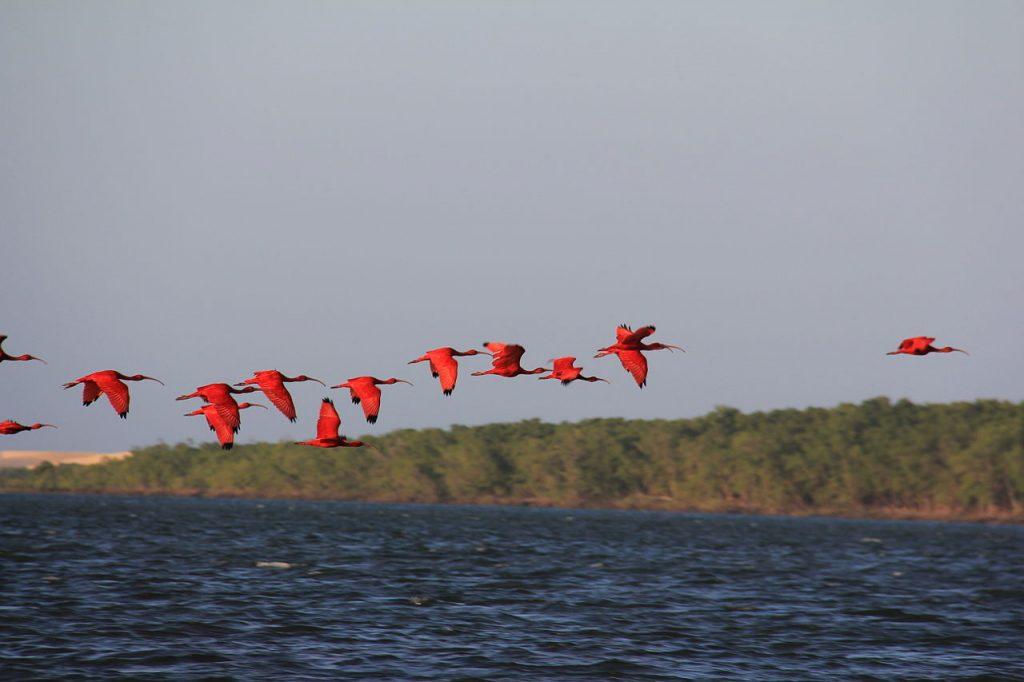Delta do Parnaiba está o o Maranhão e o Piauí