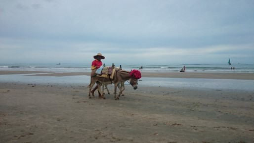 Jegue para passeios em Canoa Quebrada